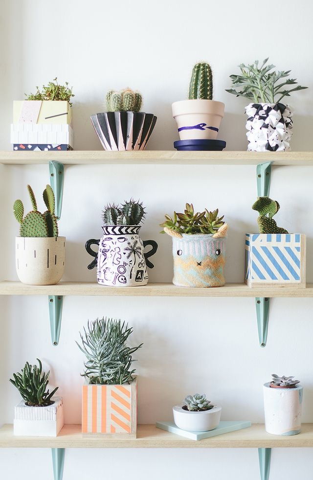 pinterest cacti